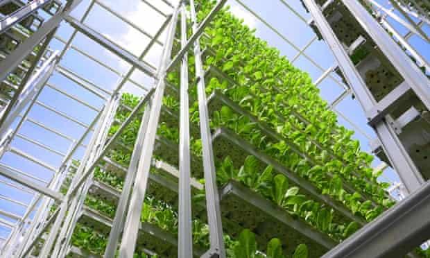Sky Greens urban farm