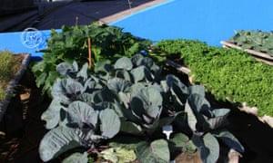 Deu Horta Na Telha - urban farm in Brazil