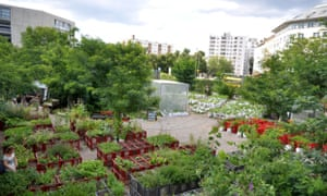 Prinzessinnengarten - urban farm in Berlin, Germany
