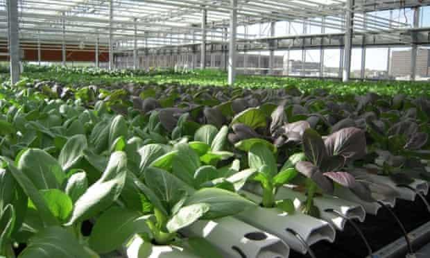 Lufa Farms - urban farm