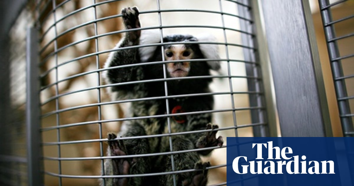 Number of animal experiments continues to rise in UK