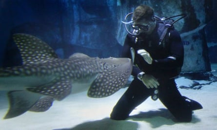 Swimming with sharks - TV presenter Steve Backshall launches the Shark Trust No Limits? campaign at SEA LIFE London Aquarium