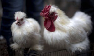 US Money roosters chicken prices