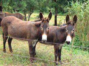 Donkeys at Burros & Artes, Portugal