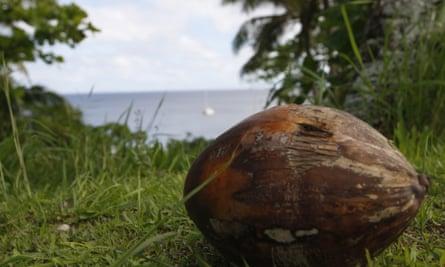 Niue coconut