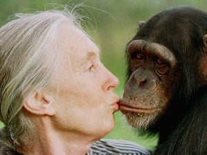 Jane Goodall gives a kiss to Tess, a female chimpanzee at the Sweetwaters Chimpanzee Sanctuary.