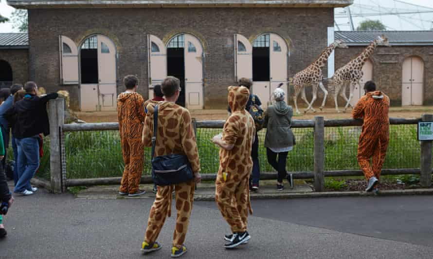 """On Friday nights throughout the summer, London Zoo hosts """"Zoo Lates"""" parties,"""