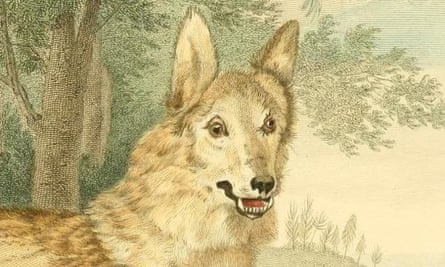 Do you recognise this wolf?