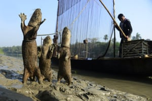 Fishing with otters in Bangladesh