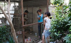 Anis and Aseel with a neighbour in a pen for guinea hens