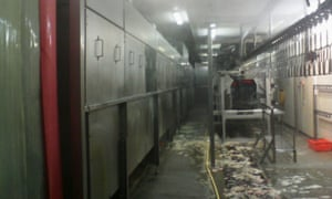 Scald tanks on the left with chicken debris on the floor