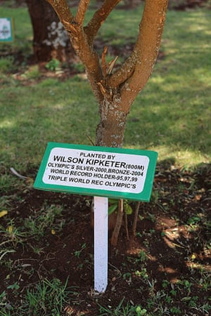 Brother Colm: Wilson Kipketer's tree