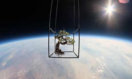 Bonzai tree in space by Azuma Makoto
