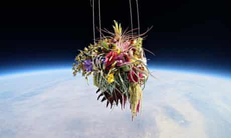 Plants in space: Azuma Makoto artwork