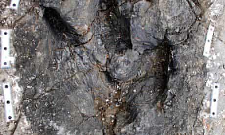 Tyrannosaur track