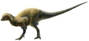 new dinosaur <i>Kulindadromeus</i>