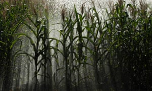 An irrigation system waters corn crops – researchers are modelling how climate change will affect crop failures.