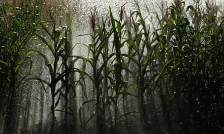 An irrigation system waters corn crops –researchers are modelling how climate change will affect crop failures.