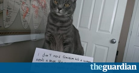 Confused Cats Against Feminism Feline Views On Gender Equality - 21 times tumblr made us love cats even