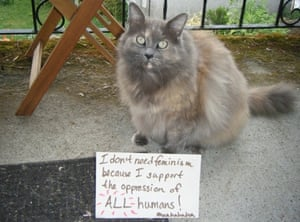 Confused cats against feminism