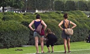 Rats in Tuileries garden