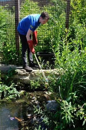 Camley Street Natural Park Volunteer