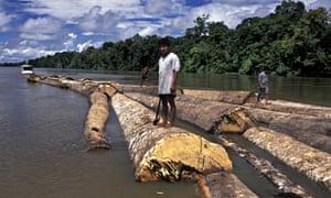 tree logs float in river brazil