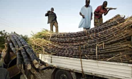 Farmers loading sugar cane into a truck in Kano, northern Nigeria