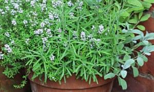 Live Better: Vertical Veg Herbs 1