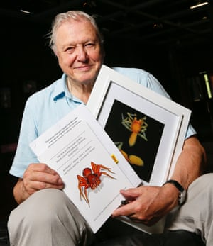 """Species named after Sir David Attenborough  : Sir David Attenborough with a photograph of the """"prethopalpus attenboroughi"""" spider at the museum of Western Australia in Perth on Saturday, Aug. 4, 2012. The new species of spider was named the """"prethopalpus attenboroughi"""" after Sir Attenborough."""