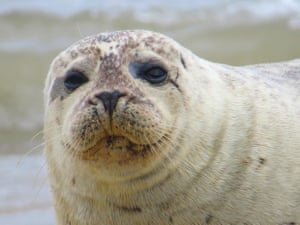 Seal on Waxham beach