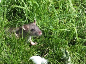 'A field mouse has a quick look outside of his house'
