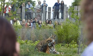 """On Friday nights throughout the summer, London Zoo hosts """"Zoo Lates"""" parties. A beer was thrown over a tiger in one incident"""