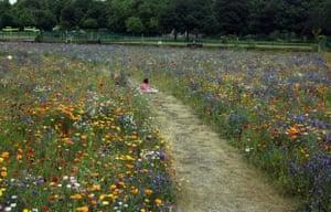 'The wild garden in Preston Park, Brighton.'