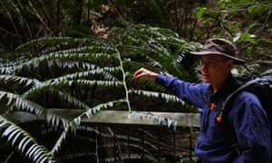 Simon Ling with a king fern at Ward's Canyon
