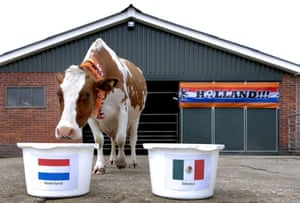 Sijtje the cow is a bit more patriotic as picks the Netherlands to triumph over Mexico at a farm in Middenbeemster, The Netherlands.  Not only was Sijtje patriotic but also correct as the Netherlands won 2-1.