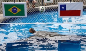 Another patriotic animal is the 30-year-old turtle named Cabecao, or Big Head, who is predicting Brazil's results at a conservation center for sea turtles in Praia do Forte. Cabecao was correct in plumping for Brazil as they beat Chile 3-2 on penalties.