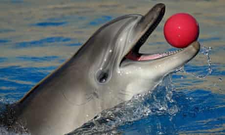 One of Ukraine's combat dolphins, trained to be dropped from helicopters to find underwater mines.
