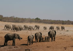 Your pictures: Elephants travelling to and from a water hole
