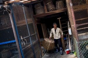 Cormorant master, Mr Masahiko Sugiyama carries a basket of sea cormorants to his fishing boat.