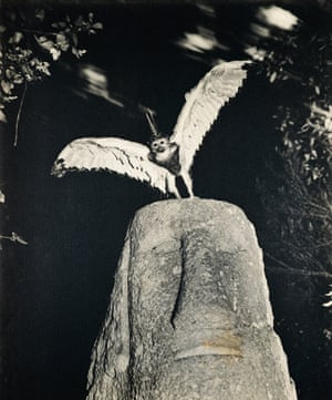 Cercophitecus Icarocornu from the Fauna series by Joan Fontcuberta and Pere Formiguera, 1987.