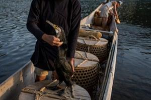 The cormorant master checks the condition of one of his sea cormorants.