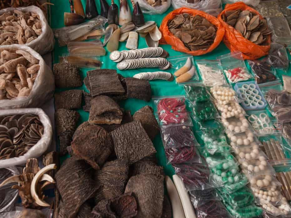 Items seen for sale include the various body parts from endangered species such as; elephant, tiger, bear, pangolin, porcupine, monkey, flying squirrel, masked palm civet cat, deer, mountain cat, fox, crocodile, different types of tropical birds and shark.