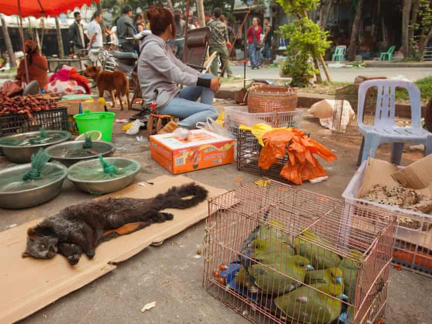 A giant flying squirrel and green pigeons are seen for sale as bush meat at a covered market in the town of MongLa, Shan State Special Region Four, Burma