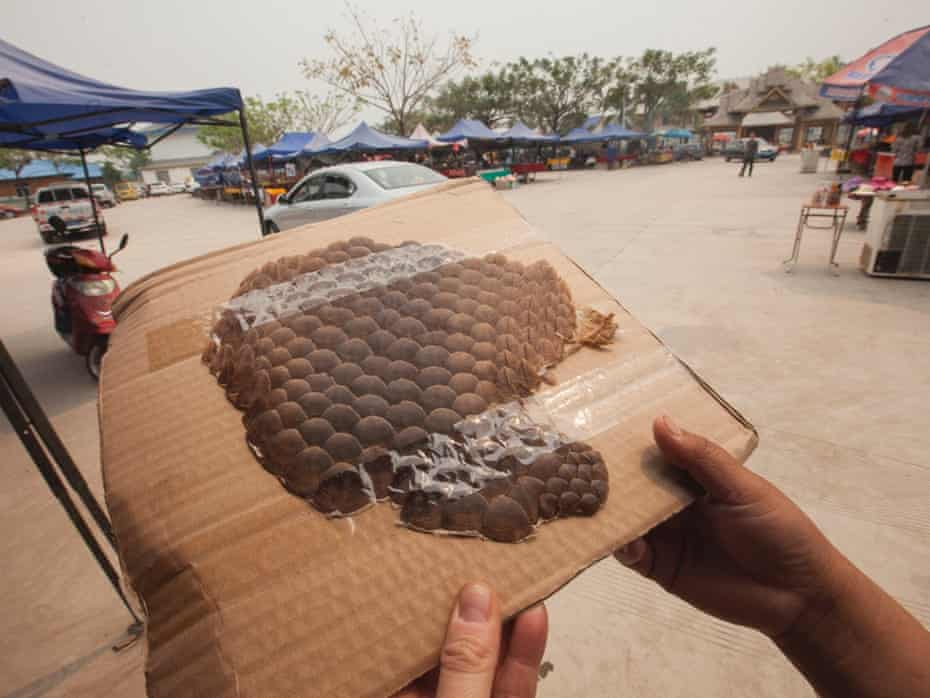 Pangolin scales costing 500RMB (   48) are seen for sale at an outdoor market catering to Chinese tourists, just yards from the Chinese official border post, in Daluo, the border town with Burma, Xishuangbanna, Yunnan Province, China