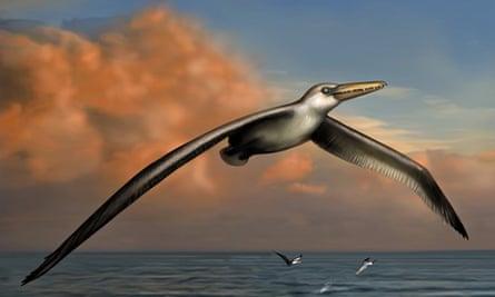 Ancient bird Pelagornis sandersi