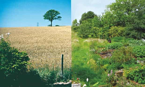 Live Better: Maddy Harland Permaculture Composite