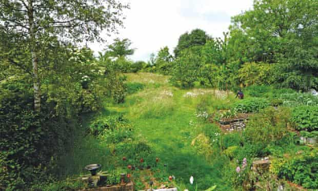Live Better: Maddy Harland Permaculture Garden After