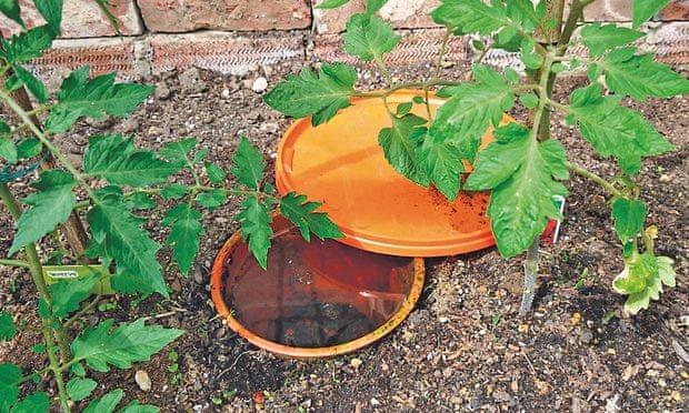 Permaculture Vegetable Garden Uk - permaculture design