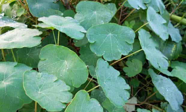 Live Better: Anni Kelsey veg and fruit mashua leaf